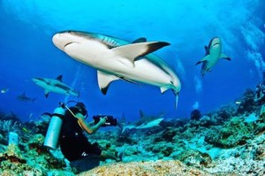 Discover MaldivesThe Paradise on earthvisit wwwbluehorizoncommv bluehorizonmaldives dive diving vacationhellip