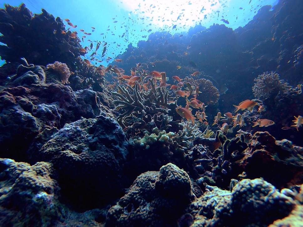 20 Photos That Prove Vaavu Atoll Is A Scuba Diver's Dream