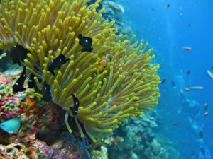 in the depths of Vaavu Atoll bio life photooftheday naturehellip