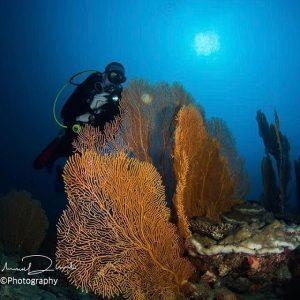 Shades of Blue maldives bluehorizon horizon3 tauchen plongee scubadive divehellip