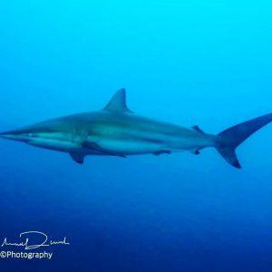 Are you looking at me ? maldives shark horizon3 bluehorizonhellip