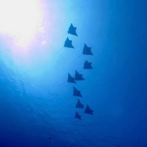 Horizon3 dive expedition south maldives expedition Horizon3 scuba holiday scubadivehellip