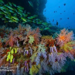 Horizon3 expeditions Scuba dive maldives colour malediven scubadive malidvas plongeehellip