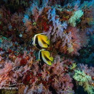 Horizon3 expeditions scubadive maldives scuba dive malediven tauchen plongee maldivashellip