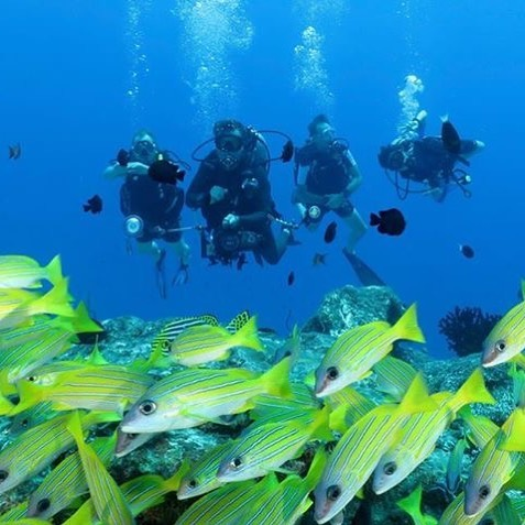 Dive with a purpose and contribute towards the environmental sustainability and coral reef protection.