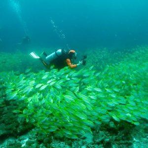 Mesmerizing horizon3 scuba tauchen plongee dive rcf divelife yacht maldives