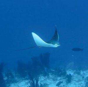 Majestic maldives scuba dive malediven tauchen plongee scubadiving bluehorizon crewlifehellip