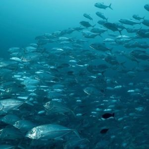 Blue amp silver scubadiving scuba dive plongee reisen maldives beachhellip