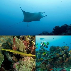 Expedition continues maldives scuba dive scubadiving expedition private maldiverna maledivenhellip
